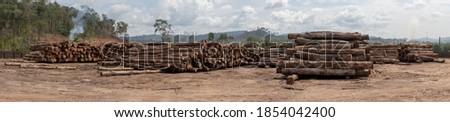 Wood log storage yard. Legally extracted from a Brazilian Amazon rainforest region. Сток-фото ©