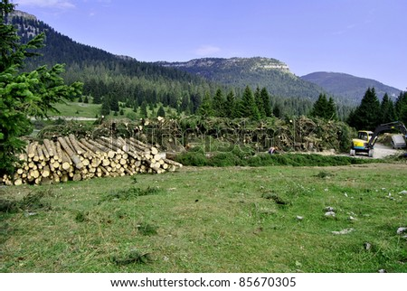 Wood Logs at Edge of Autumn Forest . In Italy, Trentino Tyrol