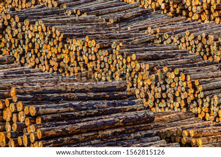 Wood Logs for the Timber Mill