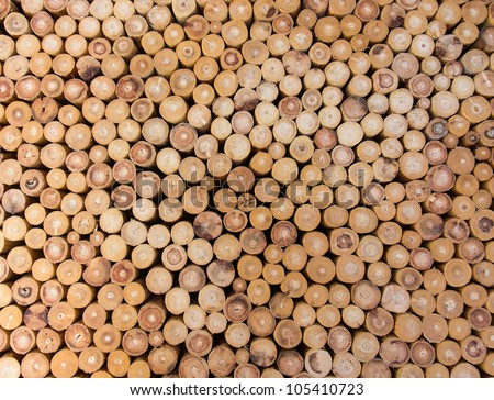 wood logs of the timber for the background.