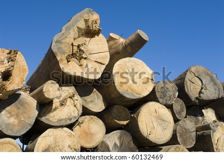 wood logs piled on the ground
