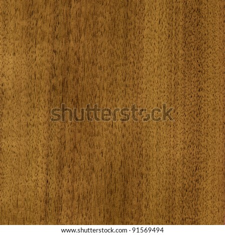 Wood, natural finishing material, veneer tree nutwood - stock photo