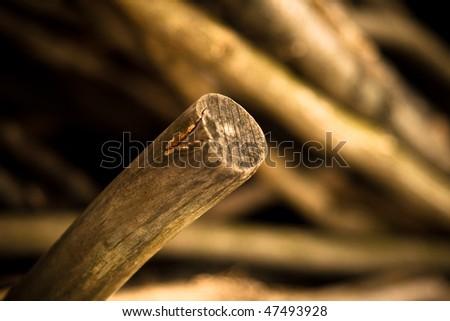 Wood nature background