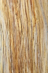 Wood of and old tree exposed - Wood Background and Texture  - Lines and cracks of classic Hardwood