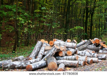 Wood of birch, sawed in the forest in winter for heating furnace