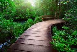 Wood path over river and through tropical forest