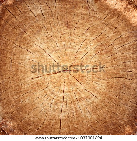Wood pattern,Wood grain texture of old tree stump with cracks in brown tone for background