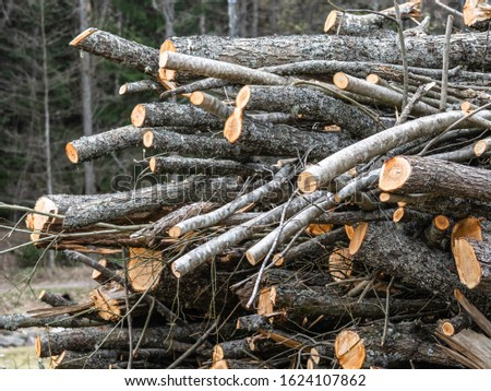 Wood pile or wood stack of different logs  piled at the border of a forest in early spring, forestry in Finland