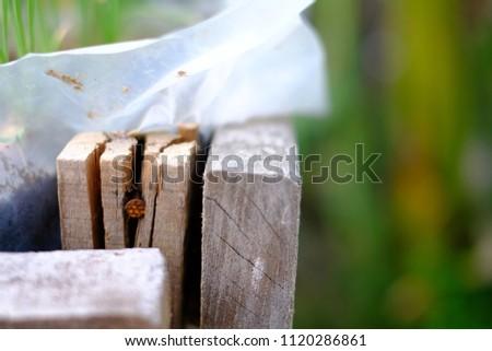 Wood rod trace #1120286861