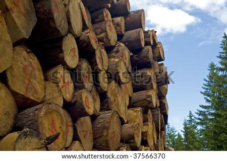 wood sawed