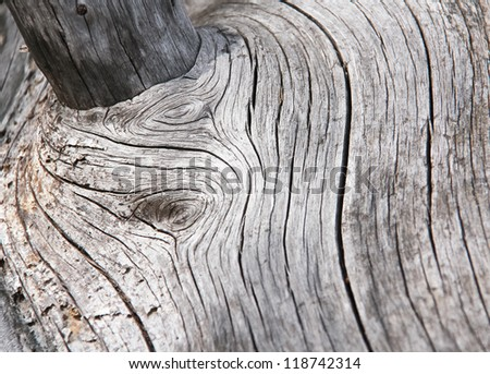 Wood shapes in an dead trunk