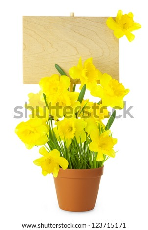 Wood Sign with Daffodil (Narcissus) Flowers / empty board for your text /  isolated on a white