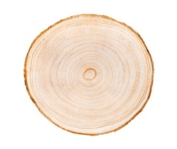 Wood slice with with growth rings isolated on white. Natural smooth wood texture.