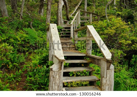 wood stair in rain forest, vancouver island, bc, canada