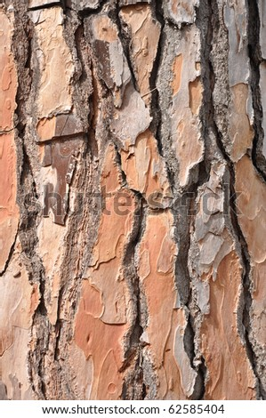 wood structure - stock photo