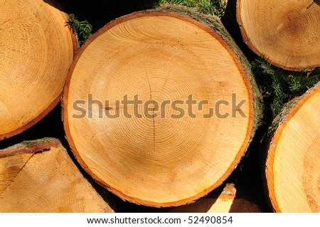 Wood structures of a cut tree in a cross-section