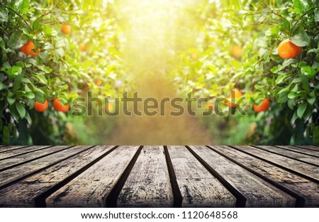 Wood Table with Blur Orange Garden Background in the Morning with Copy Space for Display Product or Montage Design #1120648568