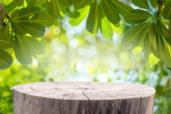 Wood table with Green leaves and Forest on the blurred background.Ready for product display.