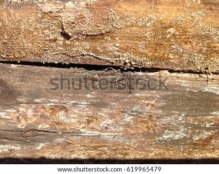 Wood texture #619965479