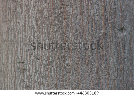 wood texture background #446305189