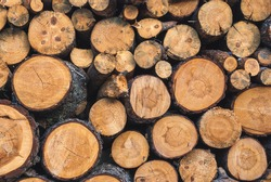 Wood texture background have many logs that cut from big trees and small trees