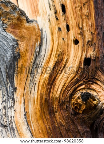 Wood Texture Background Pattern Closeup Detail - stock photo