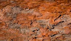 wood texture brown and green,fir tree bark