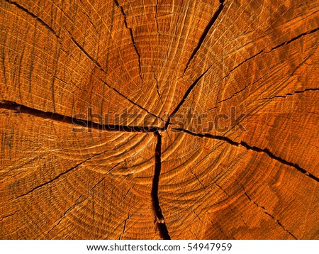 Wood texture detailed