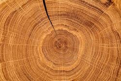 Wood texture grunge background