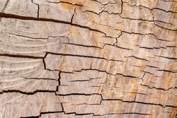 Wood texture of apple tree with cracks