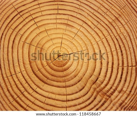 Wood texture of cutted tree trunk, close-up