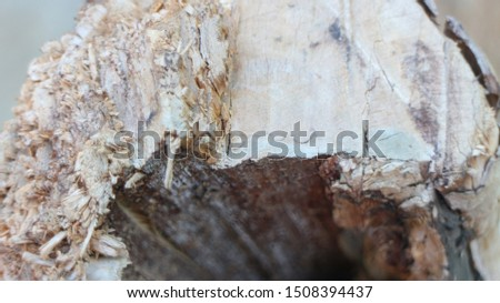 Wood texture that has been cut #1508394437