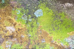 Wood texture, with weathered look, old which has Moss and mold affect a wood