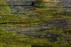 Wood textured background with green moss texture