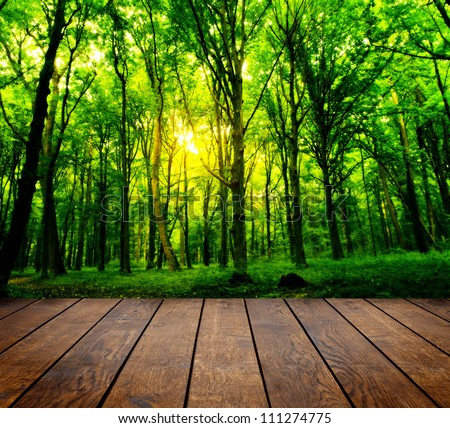 wood textured backgrounds in a room interior on the forest backgrounds #111274775