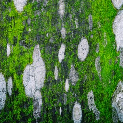 wood textured have Moss on texture