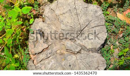 wood timber Background Timber texture #1435362470