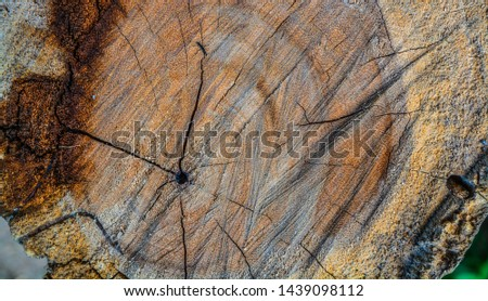 wood timber Background Timber texture #1439098112