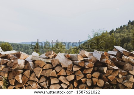 Wood timber Background with forest view