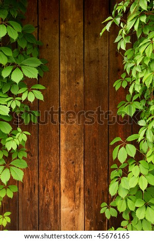 Wood wall with green leaves