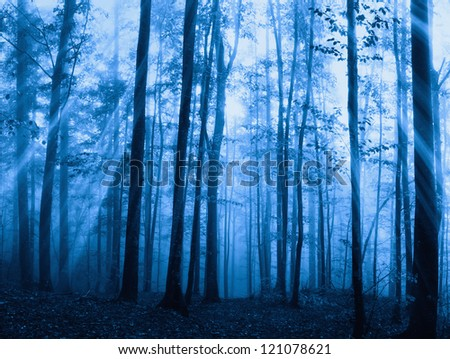 wood with fog and sunbeam