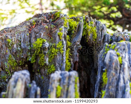 Wood with moss and lichen abstract composition from Natural Park of Grand Paradis Cogne Aosta Valley. #1199420293