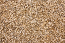 woodchip background great concept for a sawmill or carpenter could also be a playground safety floor