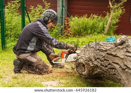 Woodcutter cuts the chain saw. Professional Lumberjack Cutting a big Tree in the garden #645926182