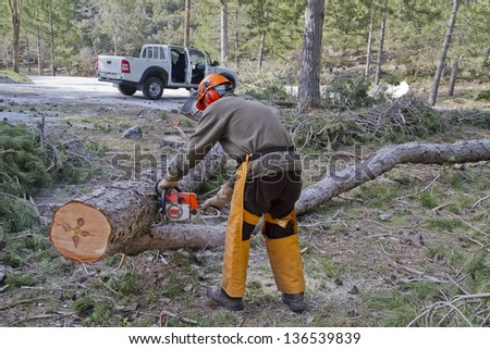 woodcutter cutting a tree with a chainsaw