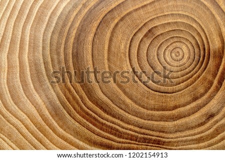 Wooden background. Macro wood cross section.