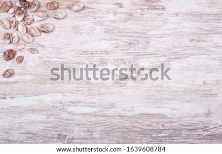 wooden background with shells and shells detail