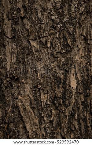 Wooden bark texture #529592470