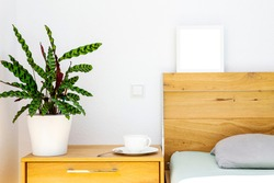 wooden bedside table with Calathea in a flowerpot, tea or coffee cup on a saucer, head of the wooden bed is decorated with a white frame with copy space. Houseplants for interior design.