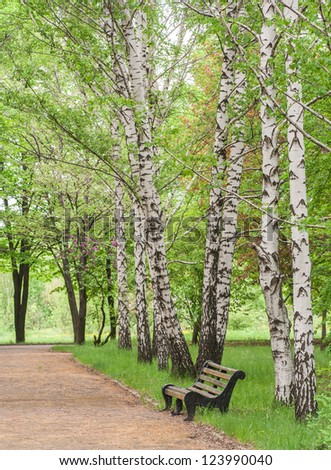 wooden bench in the park near the birches